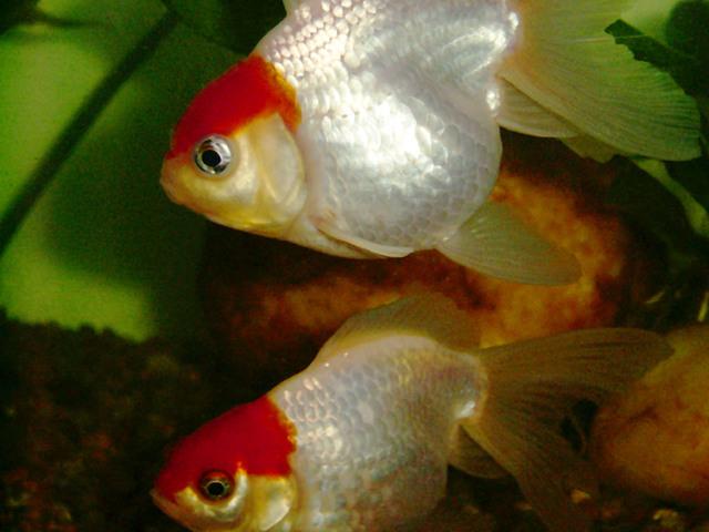fish-brothers-1252121-640x480