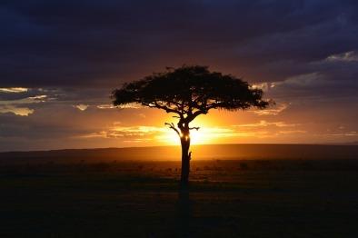 africa-3002460_640