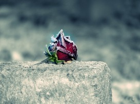 rose-2976674_640