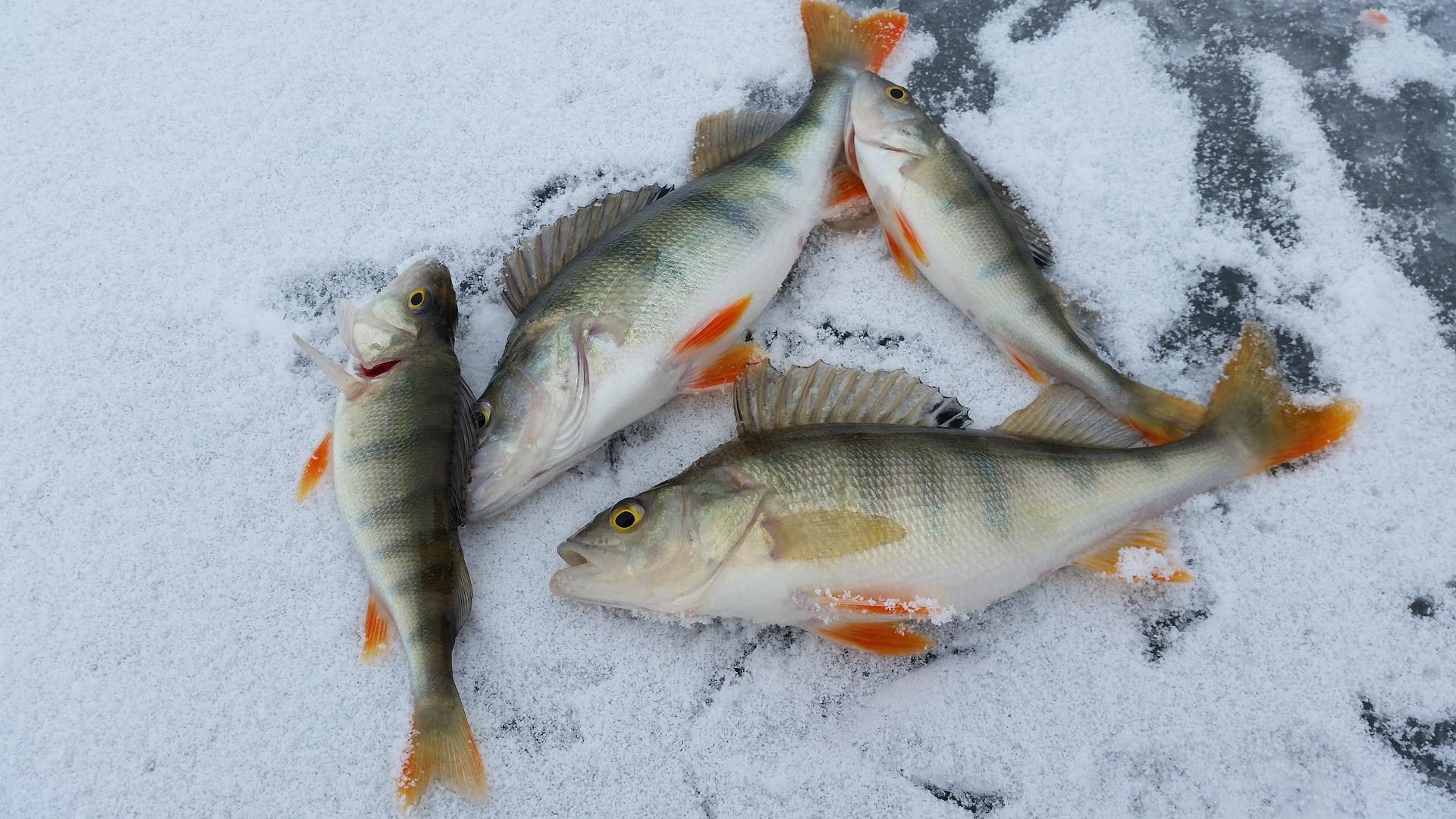 ice-fishing-2919070_1920