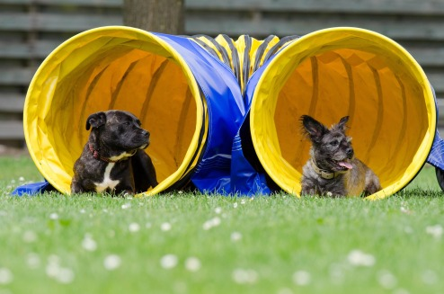 two-dogs-in-the-tunnel-750598_1920